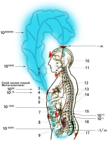 Явление тканетворения органа (полноорганности) с использованием Антропокосмоса